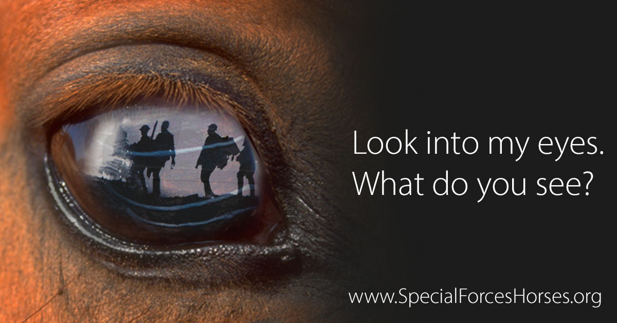 SFH FB Look into my eyes Special Forces Horses
