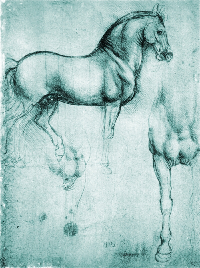Study_of_horse Blue